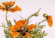 Demuth, Charles Poppies oil painting artist